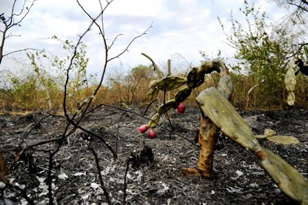 Incendio-en-el-Botanico-fue-controlado