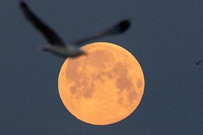 Luna-llena:-asi-se-vio-la-superluna--rosa--en-el-mundo