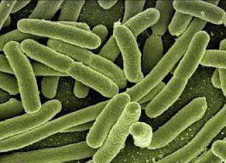 Cientificos-descubren-que-el-enigmatico--genoma-Z--esta-presente-en-mas-virus-de-lo-que-se-pensaba