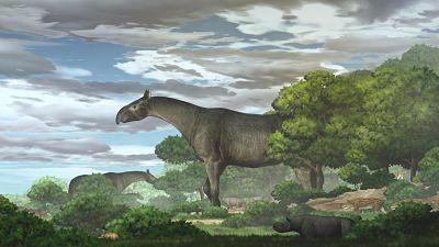 Descubren-una-nueva-especie-de-rinoceronte-gigante-que-habito-en-Asia-Central
